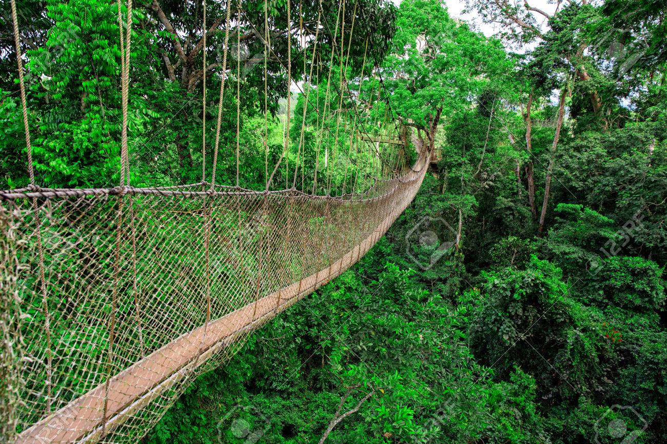 Bridge Kakum National Park, Ghana